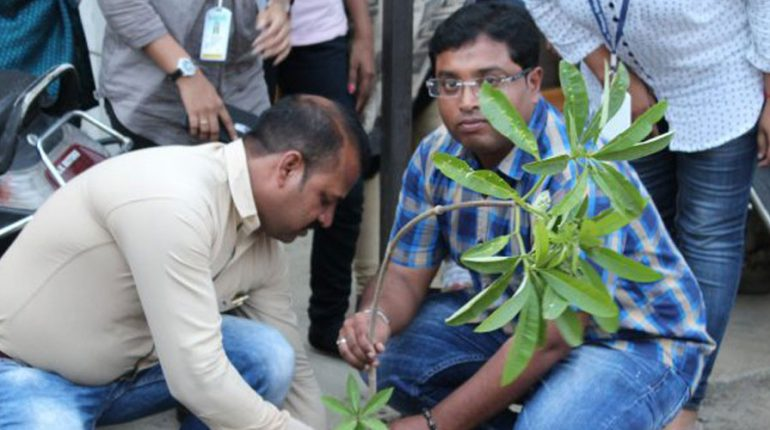 Tree Plantation in GSE | Galaxy Solar Energy Pvt.Ltd